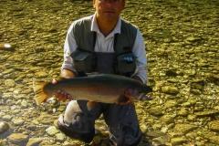 trout-rainbowtrout-sarenka-sava-bohinjka-rd-bohinj